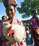 The World of Microfinance