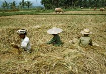 Evolution of Microfinance